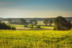 Dolina Baryczy - Łąka