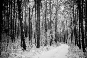 Dolina Baryczy - Las