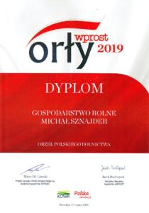 Orły Wprost 2019
