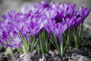 Dolina Baryczy - Kwiaty